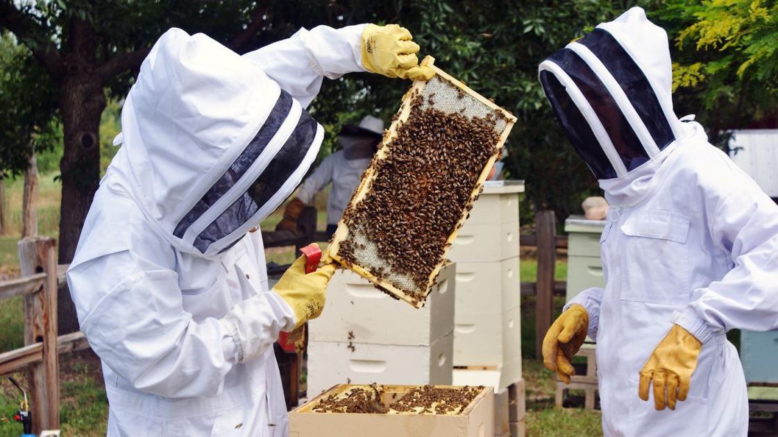 #casting un(e) apiculteur(trice) disposant de ses ruches pour tournage docu-fiction