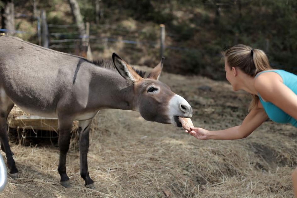 #casting femme 20/25 ans aimant les animaux pour tournage long-métrage