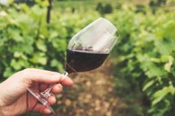 #Dijon #casting femme et homme de 25/35 ans pour une publicité d'un domaine viticole