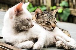 #casting personne possédant 2 chats pour le tournage d'un long-métrage