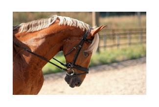 #casting #cavalier #equitation homme 25/35 ans pour la série #Versailles #Canal+