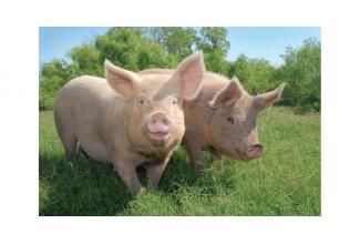 #bretagne #figuration dans le film «100% pur porc» tourné à Mûr-de-Bretagne