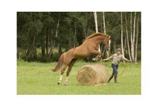 #Nord #Paris #equitation #sport #équestre divers profils pour téléfilm #Arte