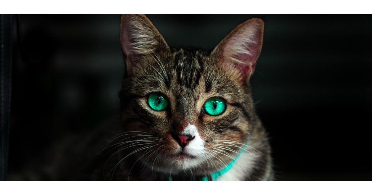 #figuration #animaux chat ayant une histoire extraordinaire pour émission TF1 #Paris