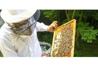 BouchesduRhone #Marseille #figuration hommes 25/40 ans apiculteurs pour tournage publicité