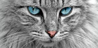 #figuration chat à poils longs pour tournage film publicitaire Somfy
