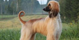 #figuration femme 30/35 ans avec un chien pour tournage publicité croquettes
